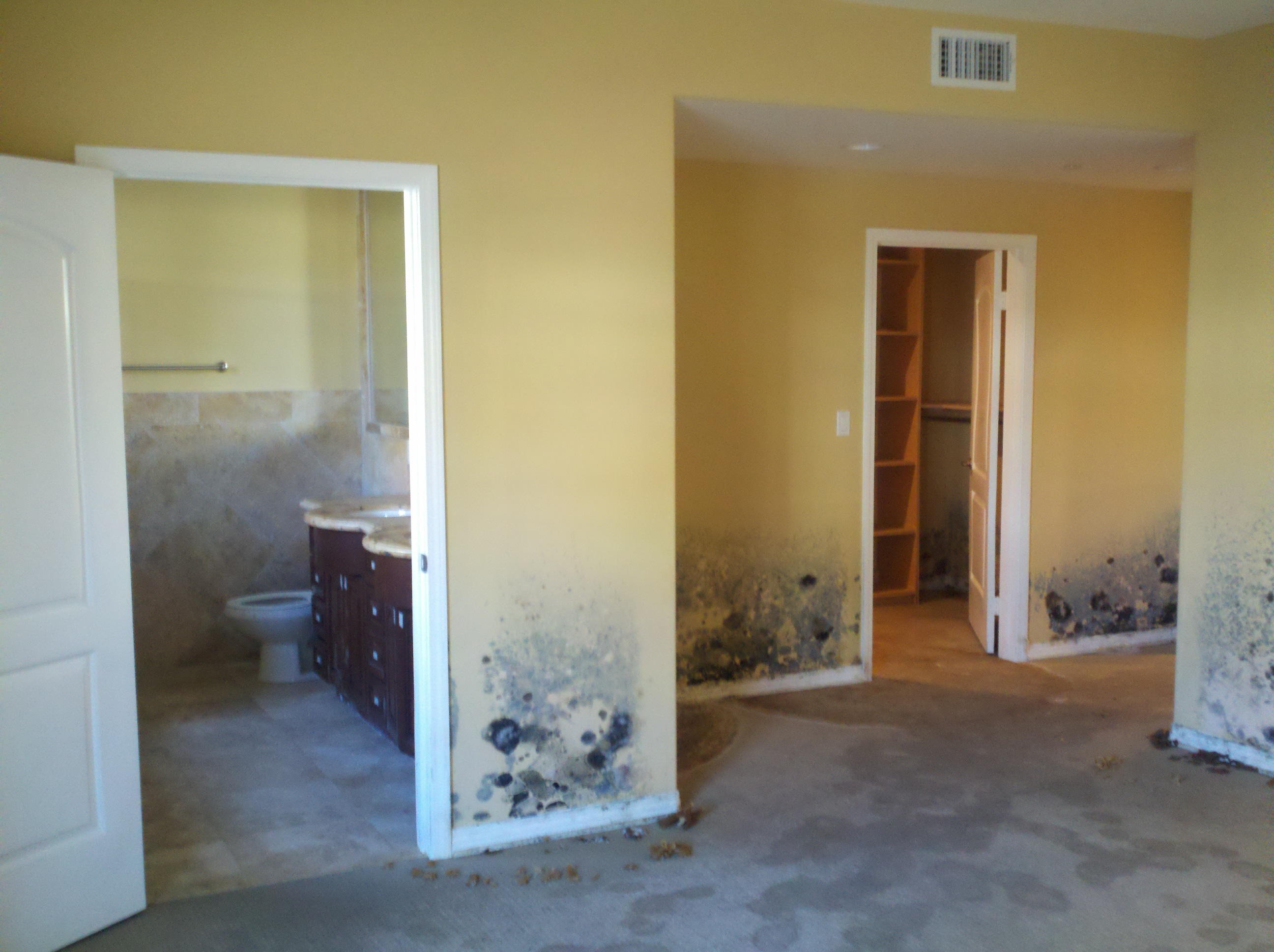 Mold in vacant unit